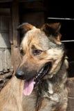 Perro cerca de una perrera Imagen de archivo
