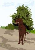 Perro cerca del árbol Imagen de archivo libre de regalías