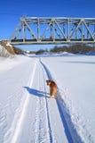 Perro cerca del puente ferroviario imágenes de archivo libres de regalías