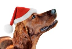 Perro chino feliz 2018 del oro del sombrero de Papá Noel del Año Nuevo Imágenes de archivo libres de regalías