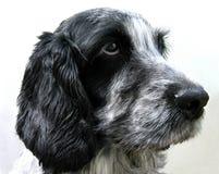 Perro-ciérrese-para arriba Imagen de archivo libre de regalías