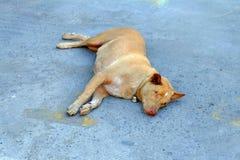 Perro ciego que pone en la tierra Fotografía de archivo libre de regalías