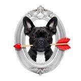 Perro color de rosa de las tarjetas del día de San Valentín Foto de archivo libre de regalías