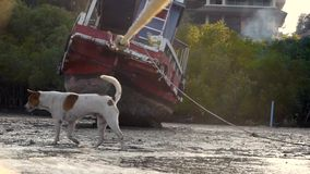 Perro común del barco de la marea baja de las imágenes de vídeo que iguala el golfo de Tailandia