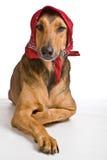 Perro como el lobo disfrazó como poco capo motor de montar a caballo rojo Foto de archivo libre de regalías