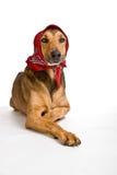 Perro como el lobo disfrazó como poco capo motor de montar a caballo rojo Fotos de archivo