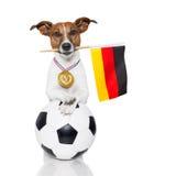 Perro como fútbol con la medalla y el indicador Foto de archivo
