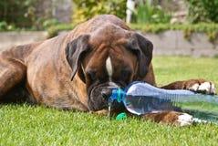 Perro con agua Fotos de archivo