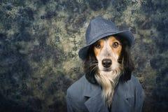 Perro con clase Imagenes de archivo