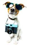 Perro con cortinas y una cámara de la foto Fotos de archivo