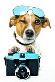 Perro con cortinas y una cámara de la foto Foto de archivo libre de regalías