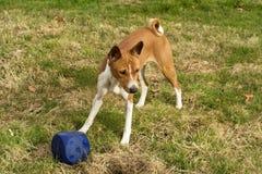 Perro con el cubo fotografía de archivo libre de regalías