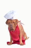 Perro con el delantal rojo y el sombrero blanco del cocinero aislados Fotografía de archivo