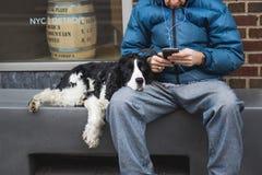Perro con el dueño con la cabeza en rodilla imágenes de archivo libres de regalías