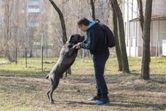Perro con el due?o en el sitio de entrenamiento en tiempo claro de la primavera fotografía de archivo
