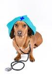 Perro con el estetoscopio Fotografía de archivo libre de regalías