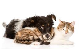 Perro con el gato junto Aislado en el fondo blanco Fotografía de archivo libre de regalías