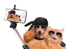 Perro con el gato que toma un selfie así como un smartphone Imagenes de archivo