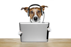 Perro con el ipad Imagen de archivo