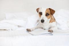 Perro con el libro en cama imagenes de archivo