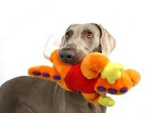 Perro con el moppet Fotos de archivo
