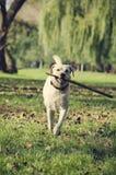 Perro con el palillo Fotos de archivo