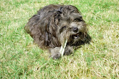 Perro con el palillo dental Imagen de archivo