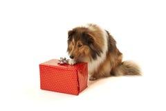 Perro con el presente Imagenes de archivo