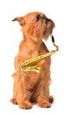 Perro con el saxofón foto de archivo libre de regalías