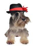 Perro con el sombrero Fotografía de archivo