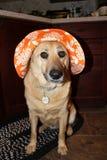 Perro con el sombrero Imagenes de archivo