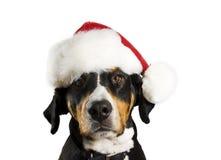 Perro con el sombrero de la Navidad Imagenes de archivo