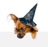 Perro con el sombrero para Halloween sobre la bandera blanca que mira abajo En el fondo blanco Imagen de archivo libre de regalías