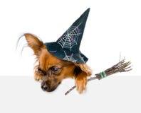 Perro con el sombrero para Halloween y con el palillo de la escoba de brujas sobre la bandera blanca que mira abajo En el fondo b Imagenes de archivo