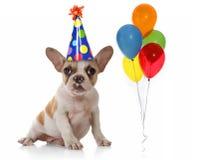 Perro con el sombrero y los globos de la fiesta de cumpleaños Imagenes de archivo