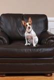 Perro con el telecontrol de la TV Fotografía de archivo libre de regalías