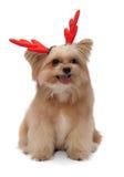 Perro con la asta de la Navidad fotos de archivo