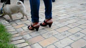 Perro con la bandera ucraniana nacional que camina en el préstamo verde, metrajes