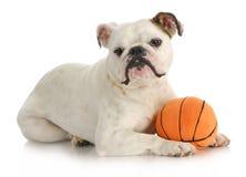 Perro con la bola Fotografía de archivo libre de regalías