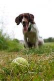 Perro con la bola Imagenes de archivo