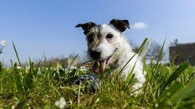 Perro con la bola Imágenes de archivo libres de regalías