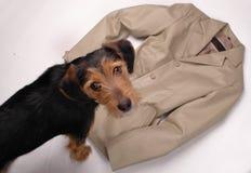 Perro con la chaqueta de cuero Imágenes de archivo libres de regalías