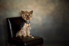 Perro con la galleta Foto de archivo
