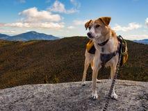 Perro con la mochila en cumbre de la montaña foto de archivo