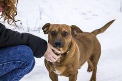 Perro con la muchacha en la nieve Imagenes de archivo