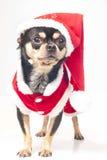 Perro con la Navidad Imágenes de archivo libres de regalías