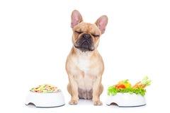 Perro con la opción de la comida Foto de archivo libre de regalías