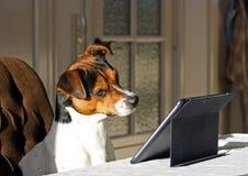 Perro con la tableta Fotografía de archivo