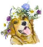 Perro con las flores Imágenes de archivo libres de regalías