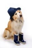 Perro con los cargadores del programa inicial y el sombrero de lluvia fotos de archivo